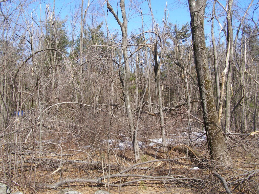 Ice storm damage, Paxton, MA